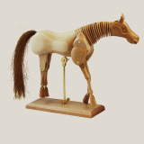 Model hestur